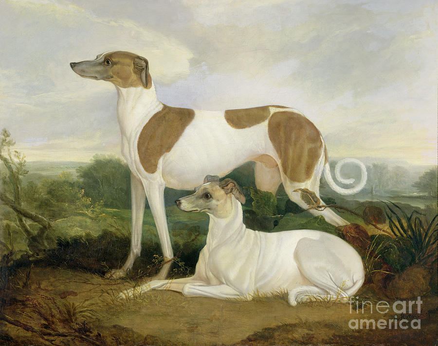 Two Greyhounds In A Landscape Photograph