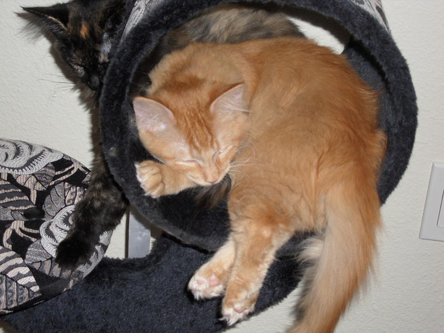 Kittens Photograph - Two Kittens by Val Oconnor