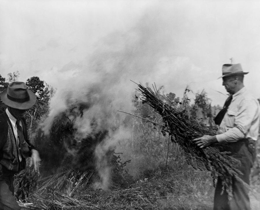 Two Men Burning Marijuana In Field Photograph  - Two Men Burning Marijuana In Field Fine Art Print