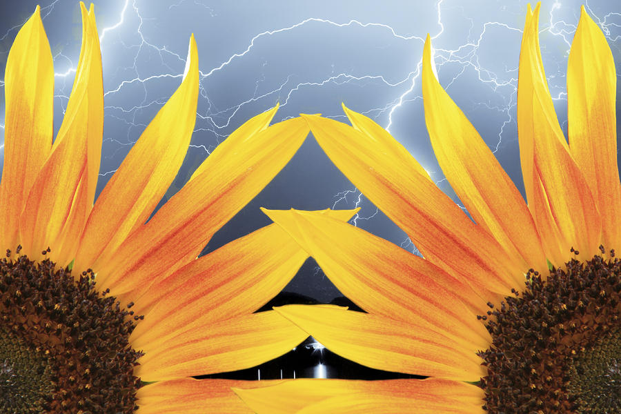 Two Sunflower Lightning Storm Photograph
