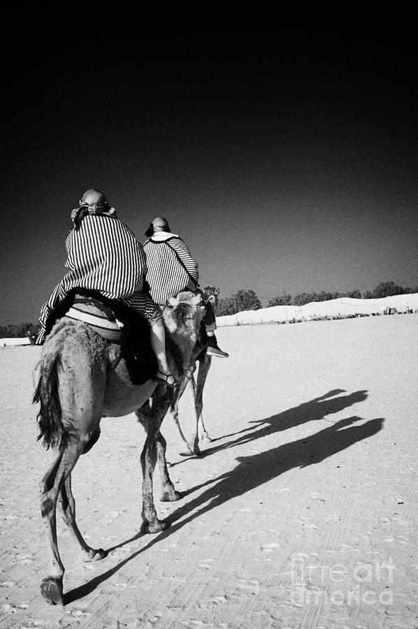 two tourists on camels return to base in the sahara desert at Douz Tunisia Photograph