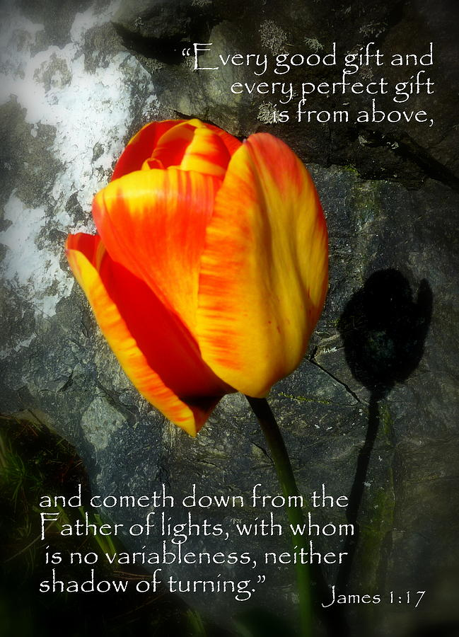 Two Tulips Shadow Scripture Photograph