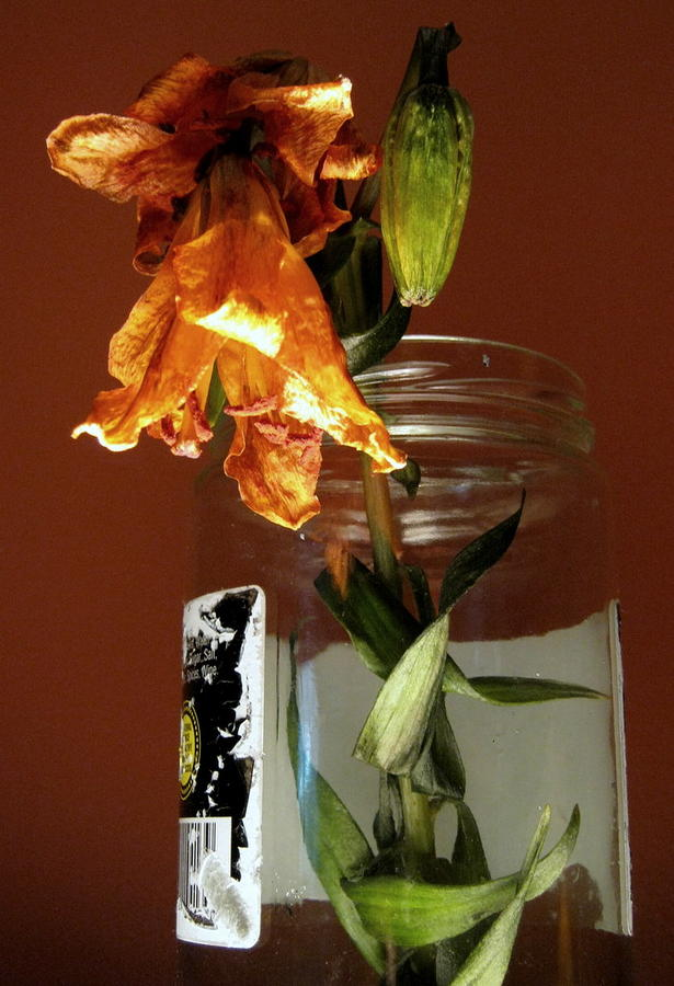 Two Wilting Flowers In A Jar Photograph  - Two Wilting Flowers In A Jar Fine Art Print