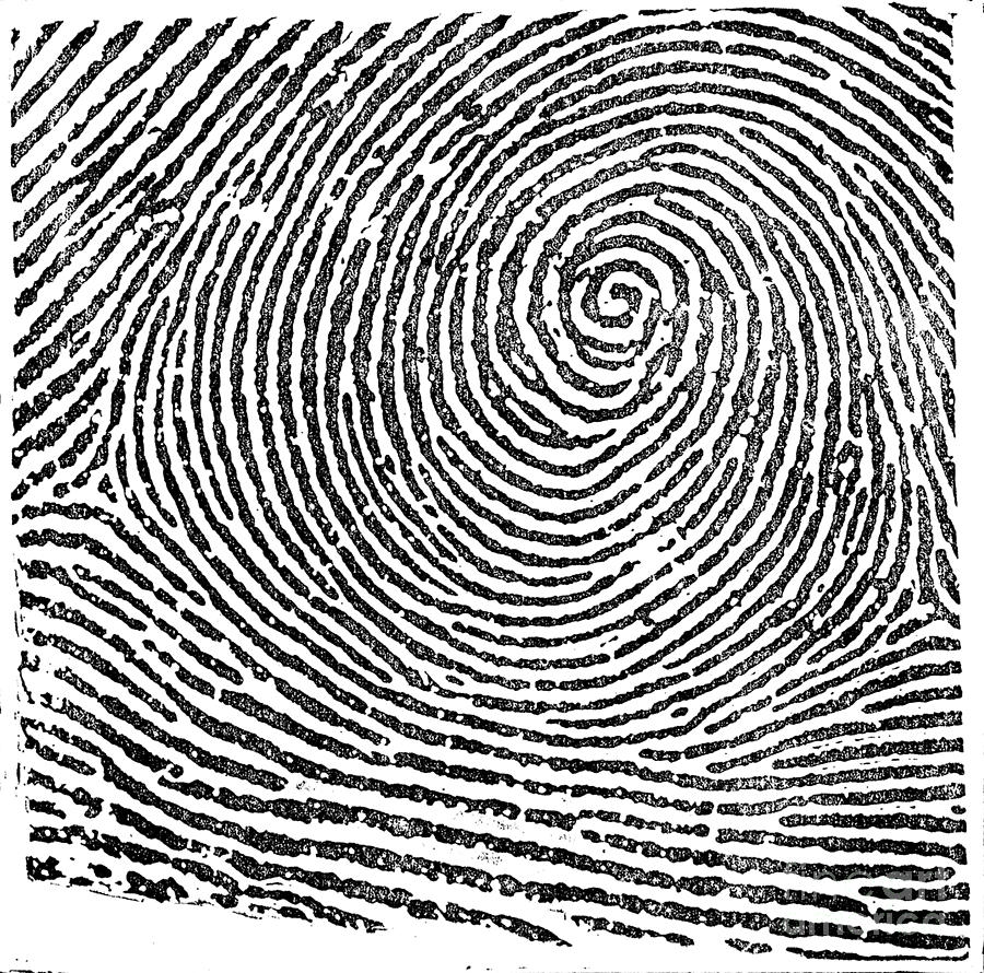 Typical Whorl Pattern, 1900 Photograph