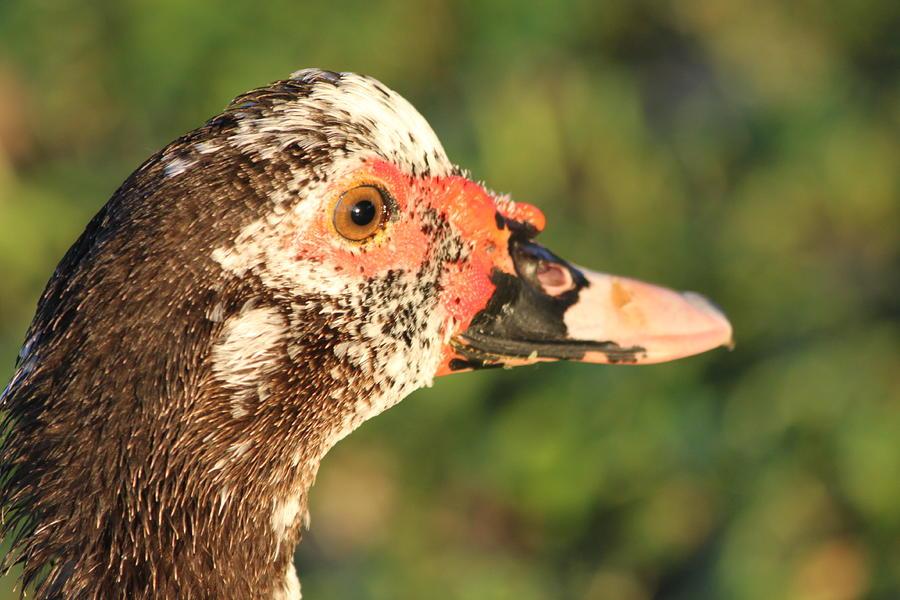 Ugly Duck by Lauri Novak