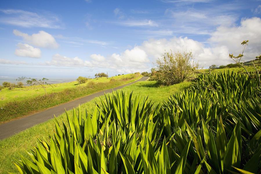 Ulupalakua Country Road Photograph