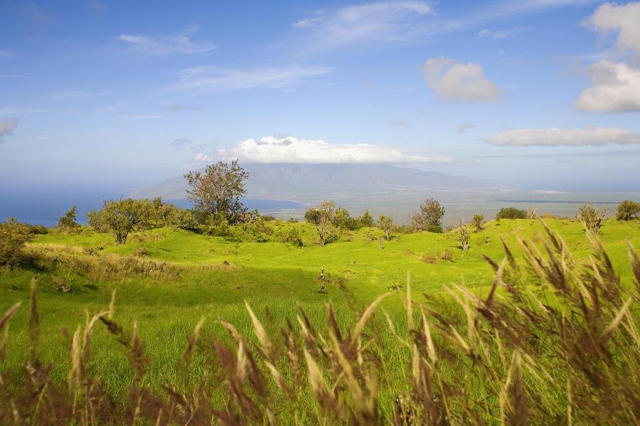 Ulupalakua Landscape Photograph