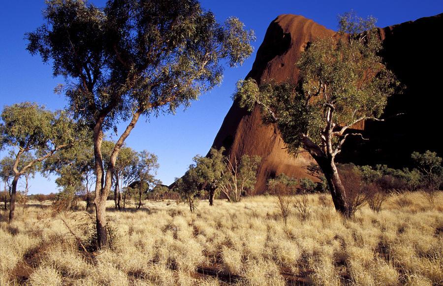 Uluru, Ayres Rock Against A Clear Blue Photograph