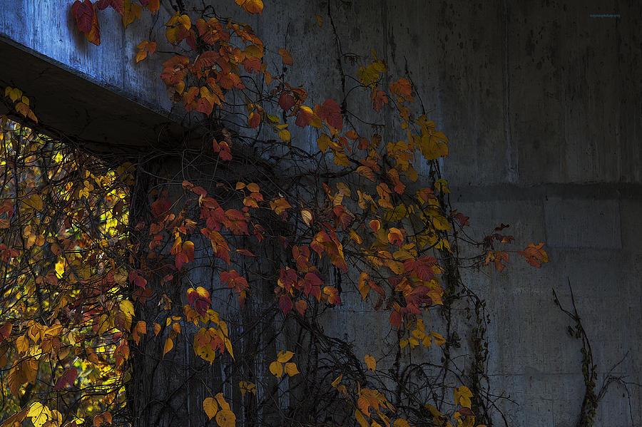 Ron Jones Photograph - Under The Overpass by Ron Jones