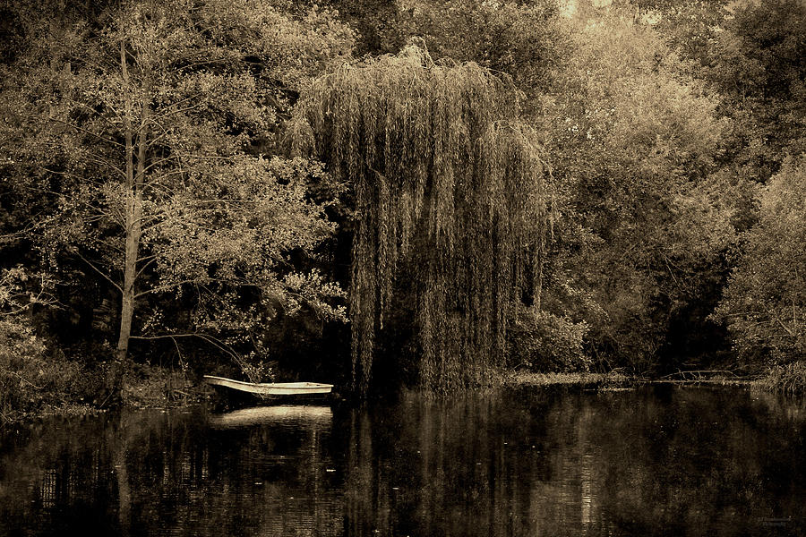 Under The Weeping Willow Tree by Sarah Broadmeadow-Thomas