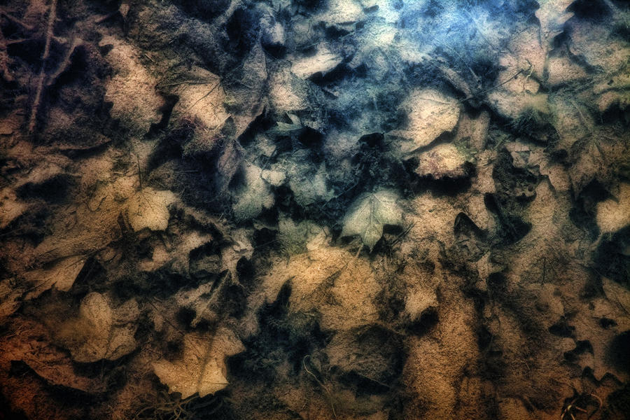 Underwater Leaves Photograph  - Underwater Leaves Fine Art Print