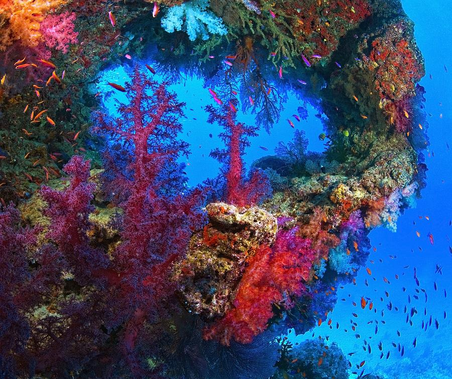 beautiful colorful coral reefs - photo #28