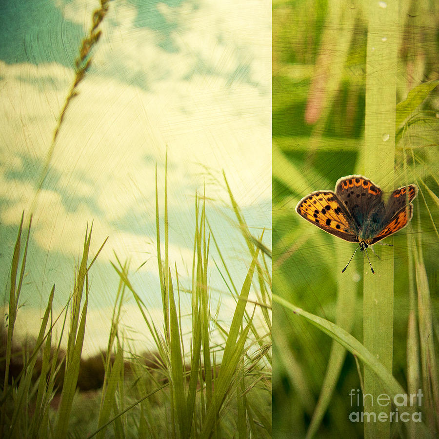 Nature Photograph - Unveil by Violet Gray