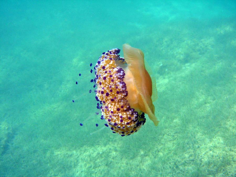 Balearic Islands Photograph - Unwelcome Jellyfish by Rod Johnson