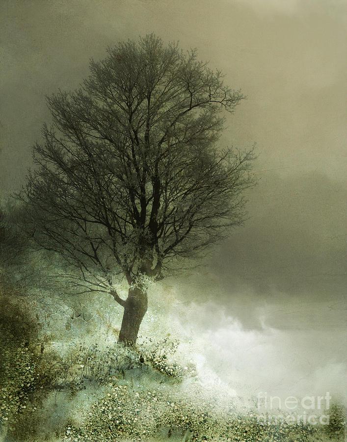 Upon The Windowsill Of Heaven Photograph