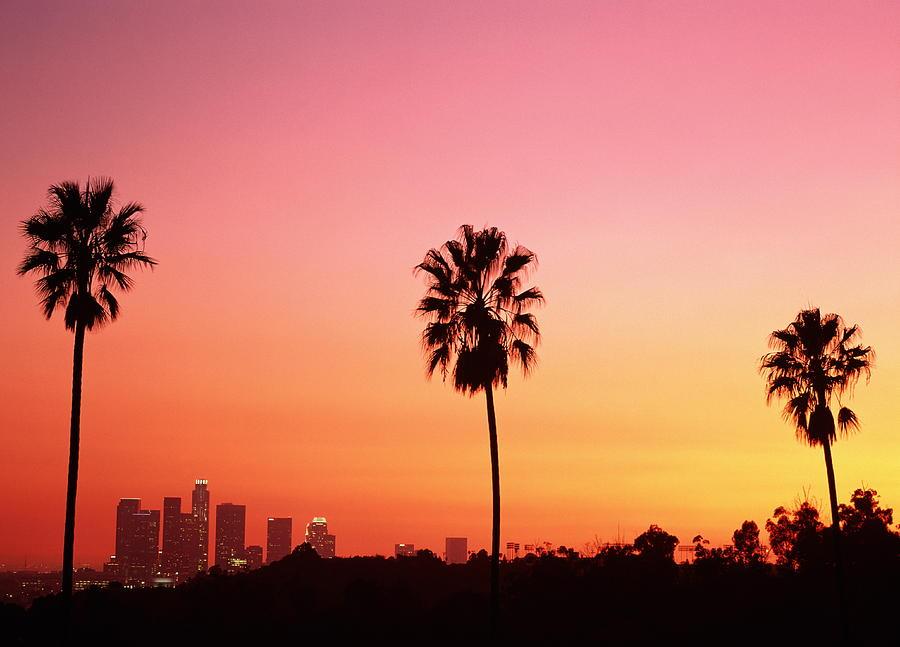Toyota Of Palm Beach ... resultaten weergegeven voor california losangeles palm trees tumblr