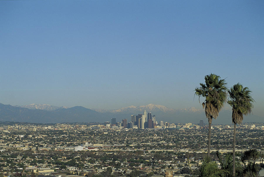 Usa, California, Los Angeles, Skyline With Palm Trees In Fore Photograph