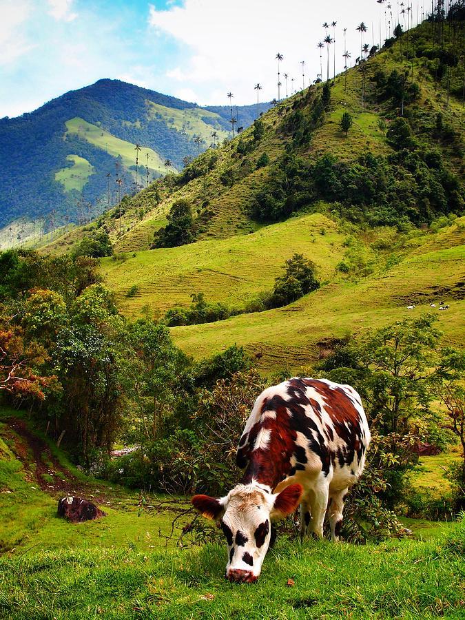 Vaca Photograph - Vaca by Skip Hunt