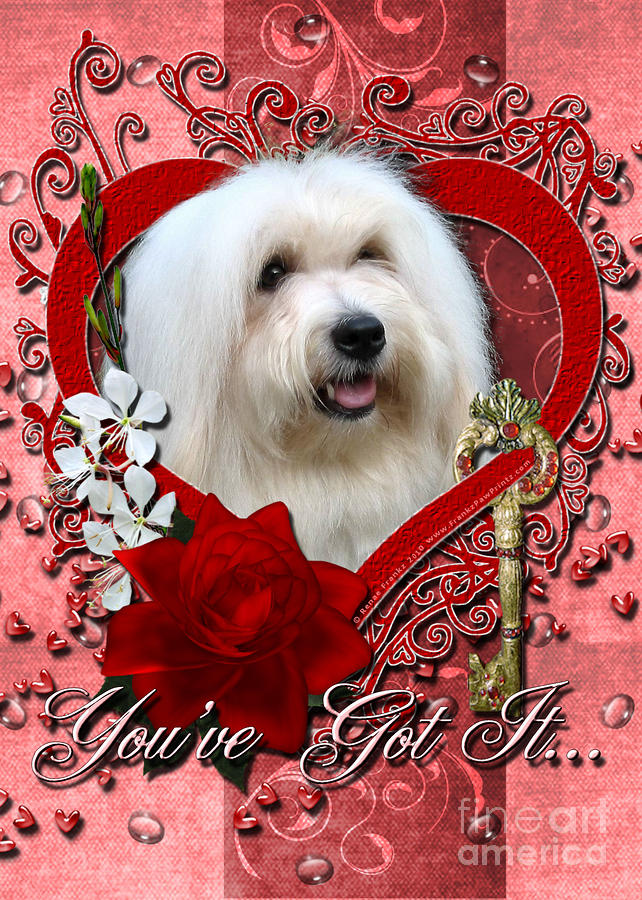 Valentines - Key To My Heart Coton De Tulear Digital Art  - Valentines - Key To My Heart Coton De Tulear Fine Art Print