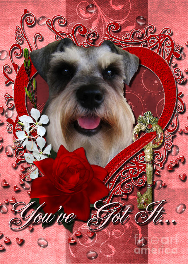 Valentines - Key To My Heart Schnauzer Digital Art