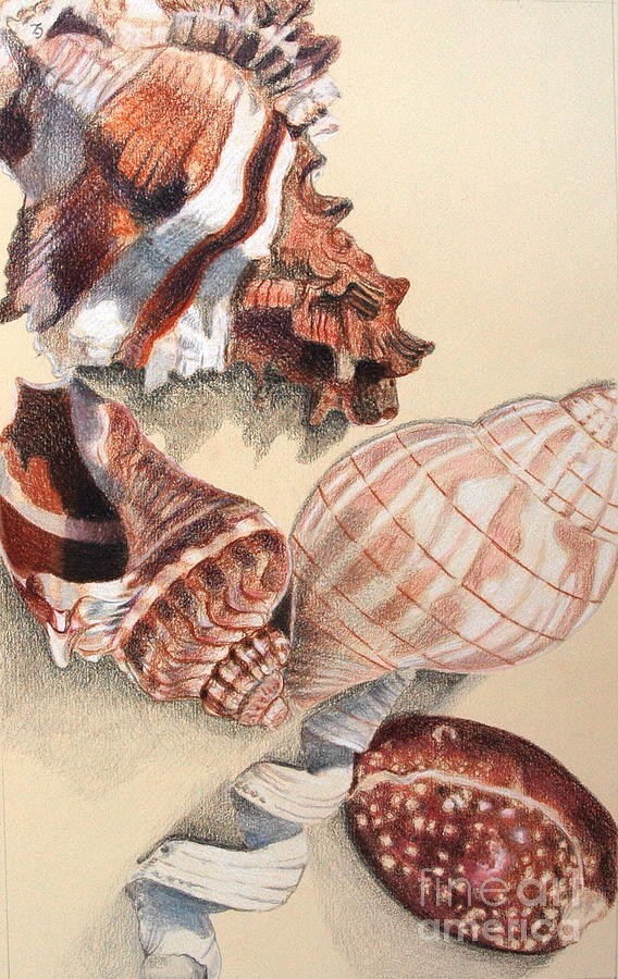 Shell Drawing - Vertical Conch Shells by Glenda Zuckerman