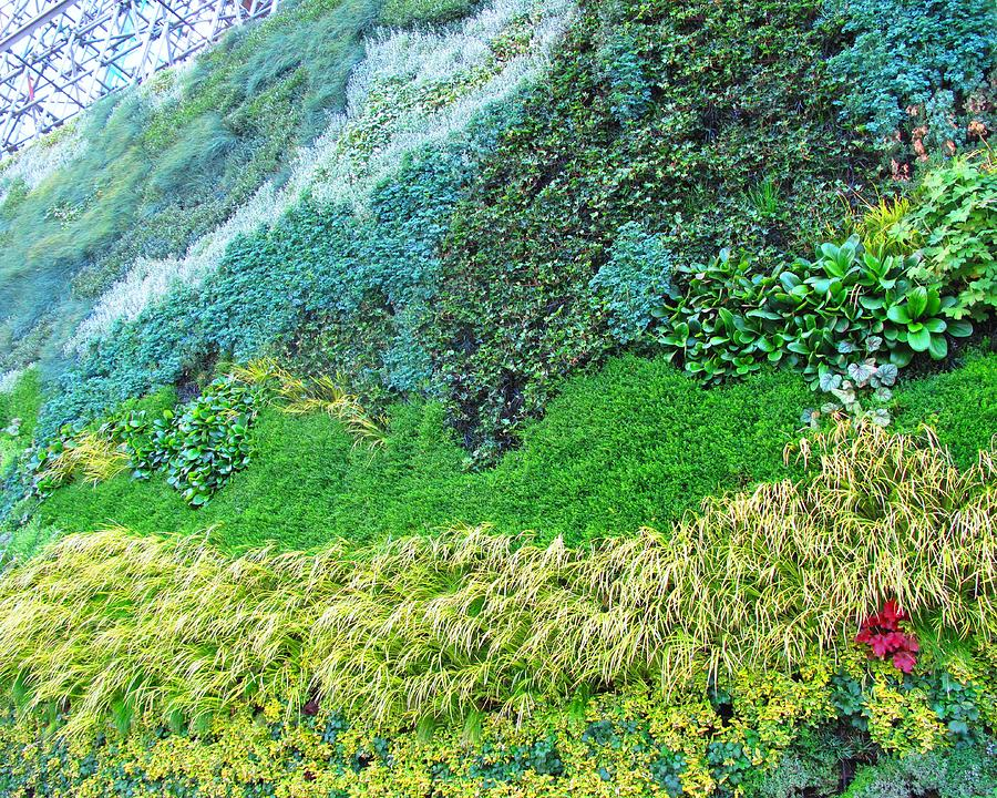 Vertical living plant wall by leslie cooper for Living plant walls