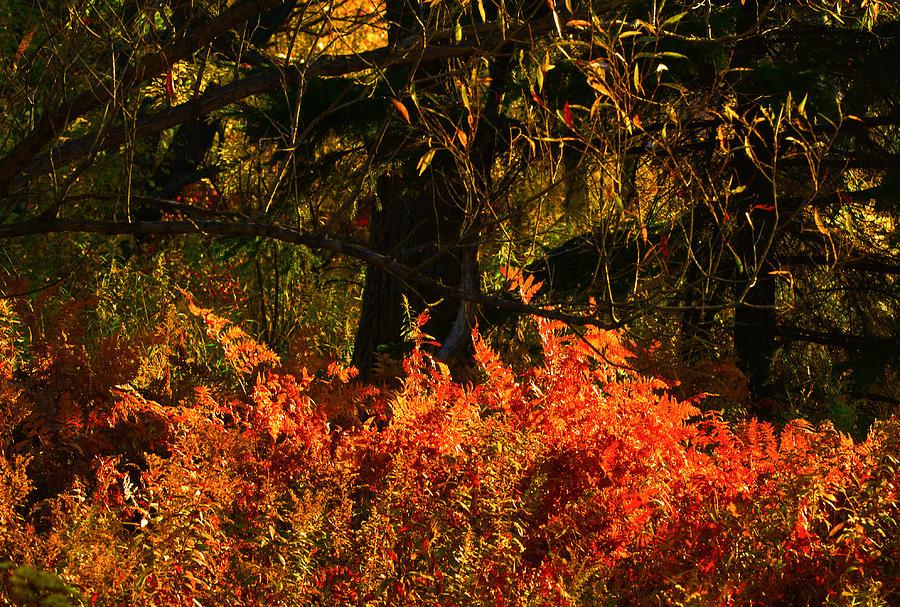 Vibrance Of Fall Photograph