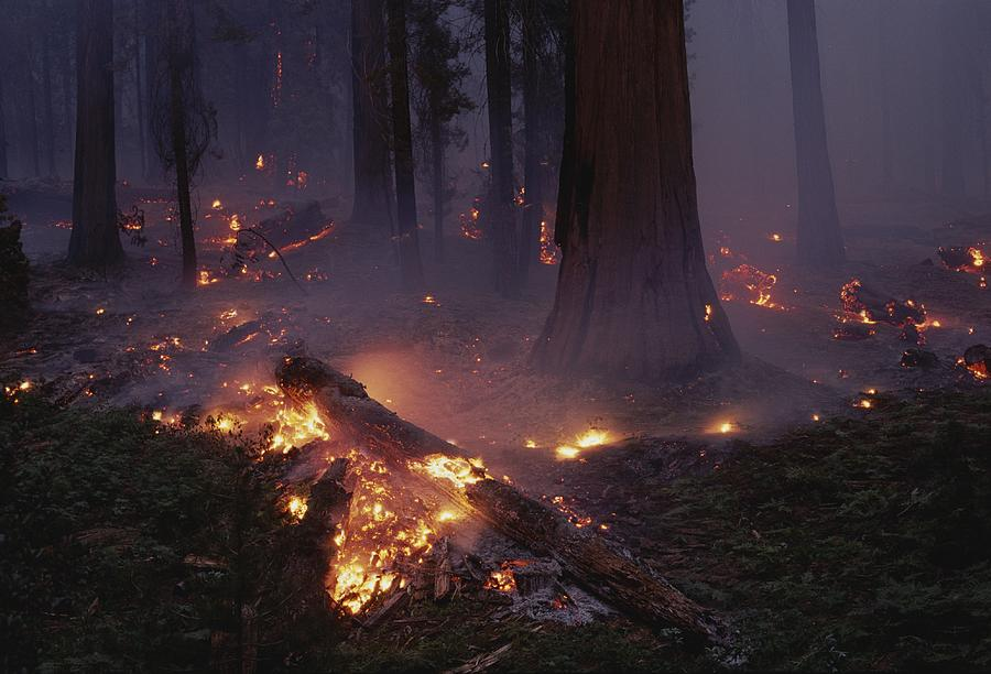 View Of A Controlled Fire In A Stand Photograph