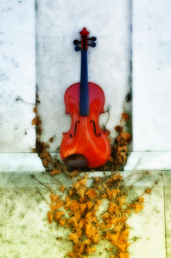 Vines And Violin Photograph