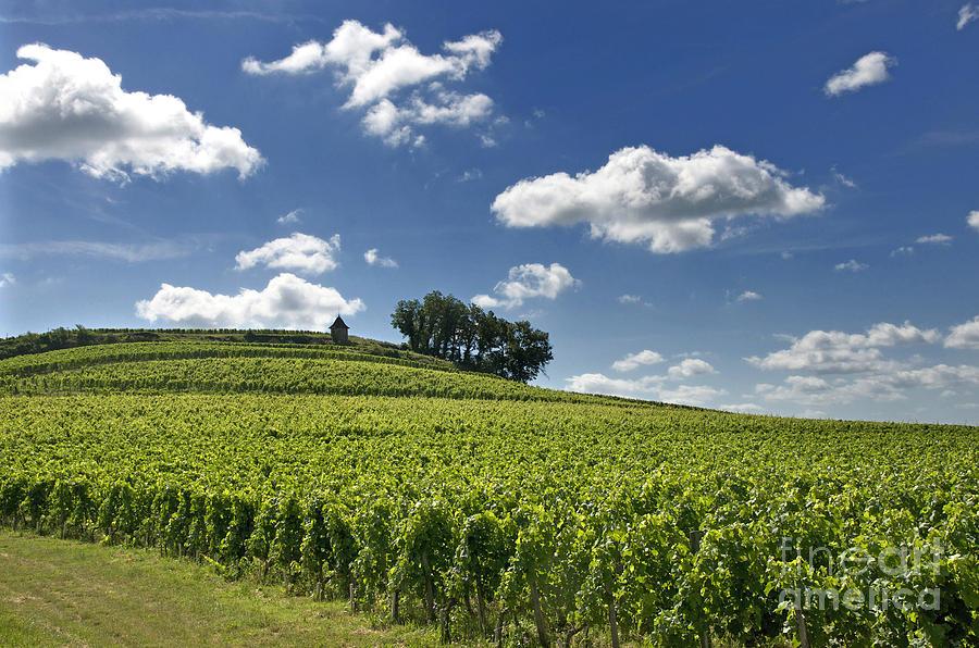 Vineyard Of Saint-emilion. Gironde. Aquitaine. France by Bernard ...