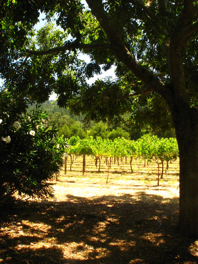 Vineyard View Photograph