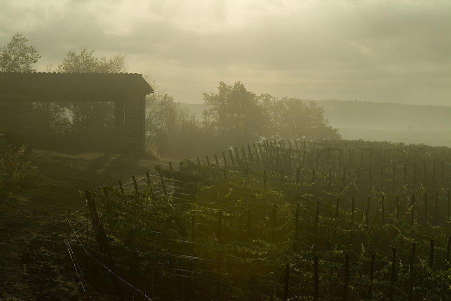 Vineyards Beside A Villa In The Fog Photograph
