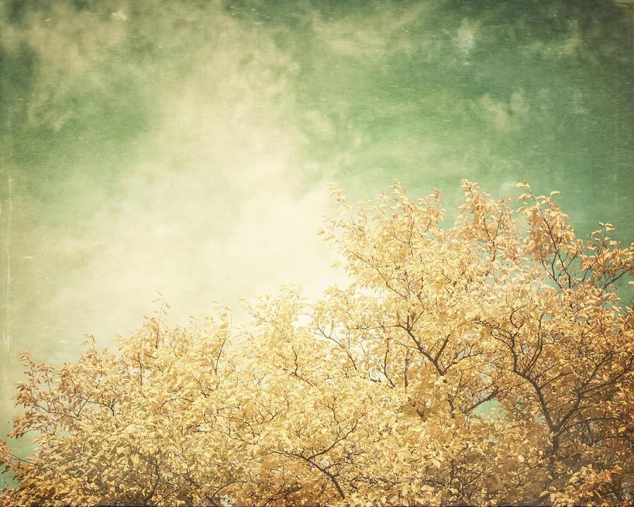 Vintage Autumn Photograph