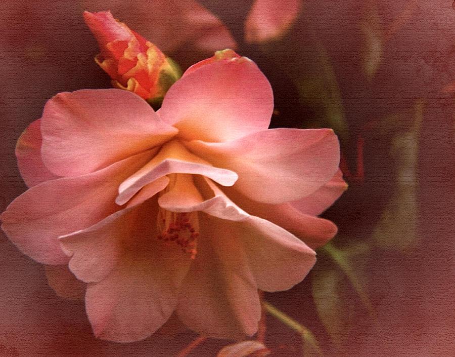 Vintage Camellia No. 1 Photograph