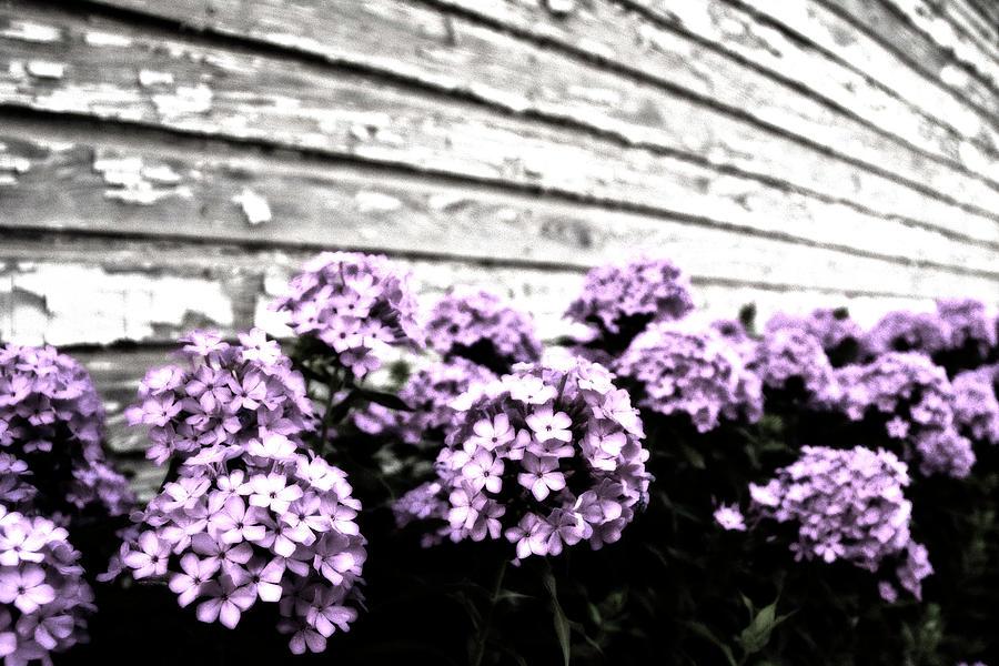 Vintage Flowers Photograph