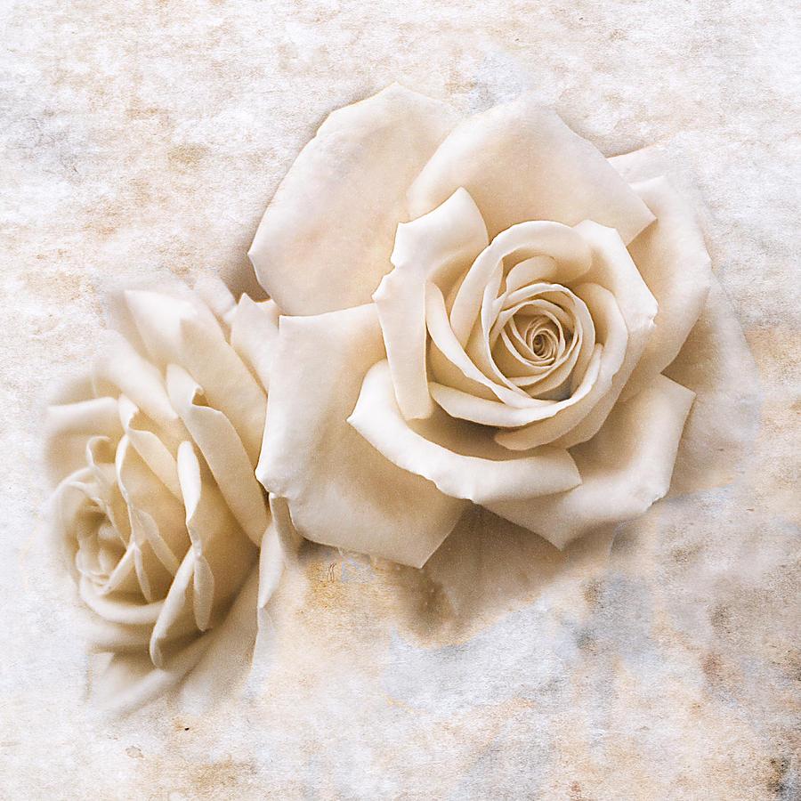 Rose Photograph - Vintage Rose Iv Square by Jai Johnson