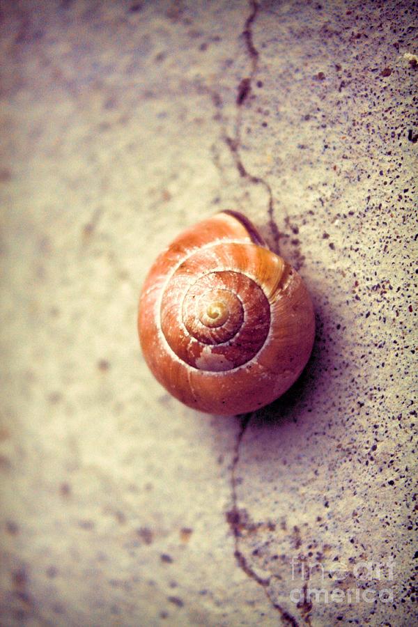 Vintage Shell Photograph