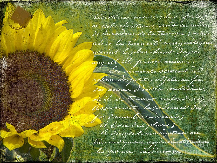Vintage Sunflower Photograph by Karen Lewis