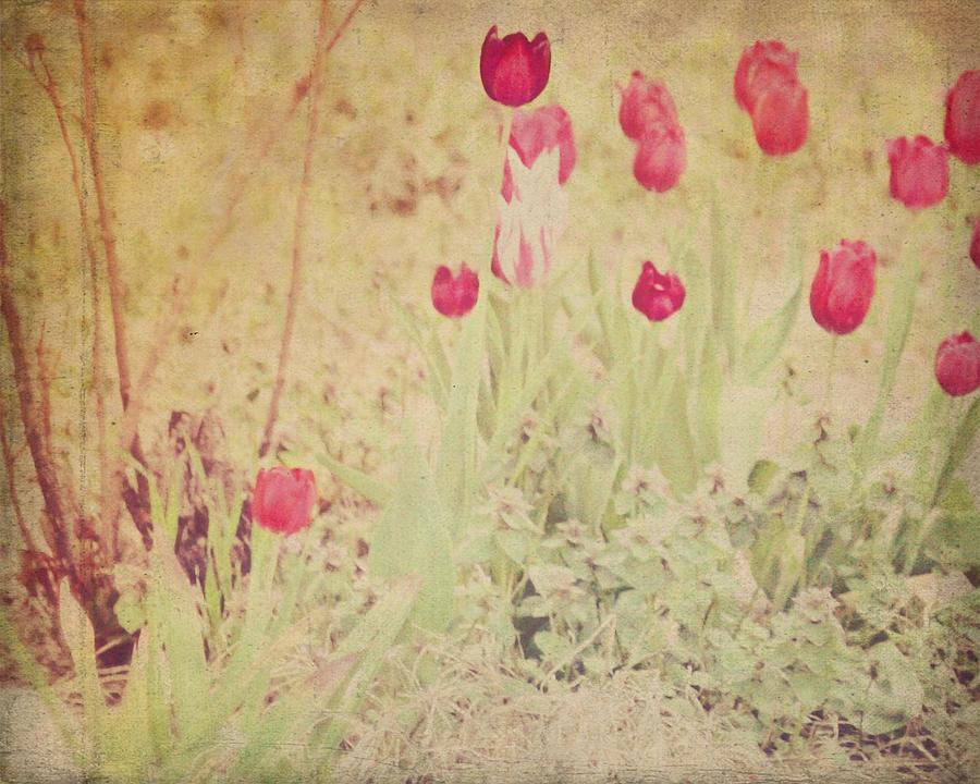 Vintage Tulips 40