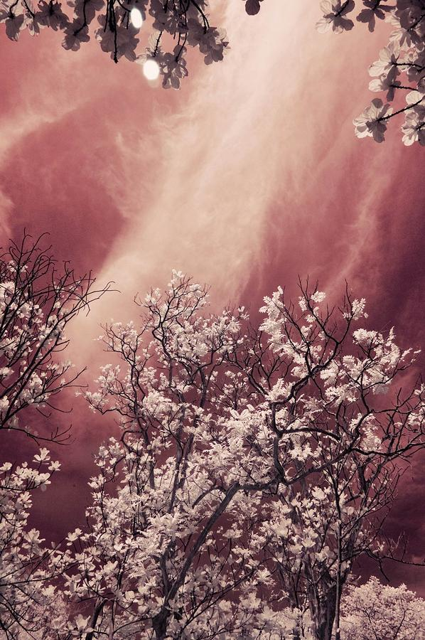 Violet Sky Photograph