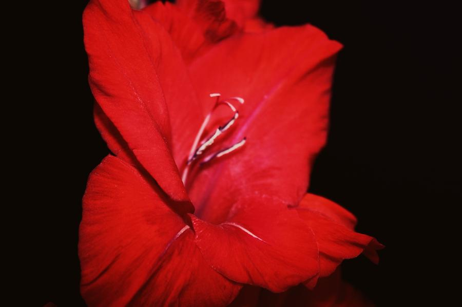 Vision Of Red Photograph