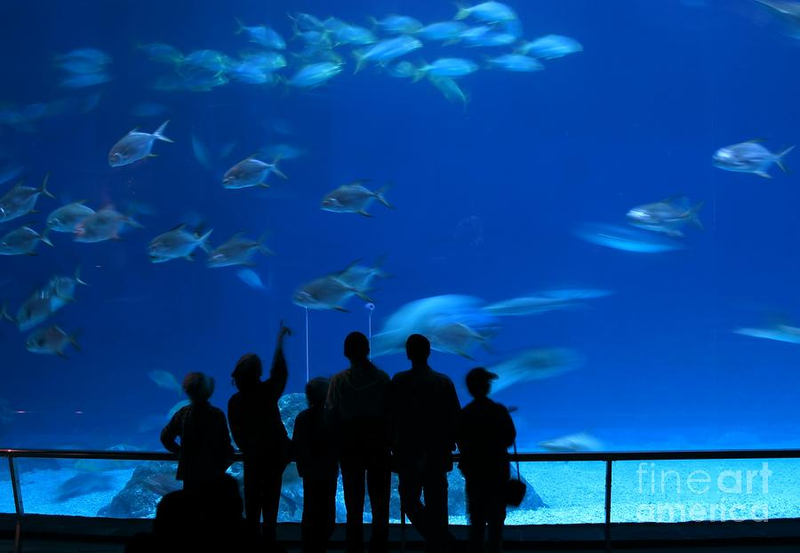 Visitors At An Aquarium Photograph