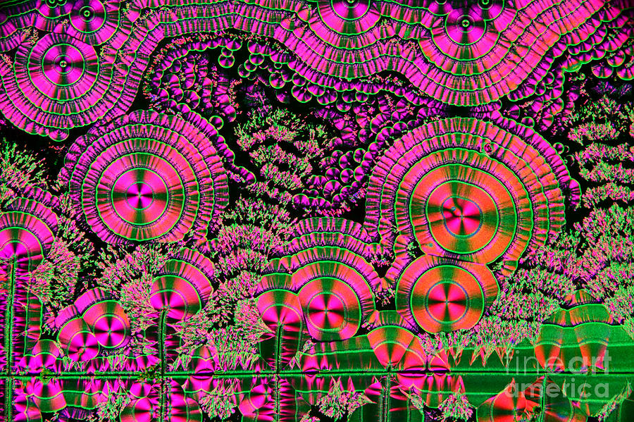 Vitamin C Crystals Spikeberg Photograph