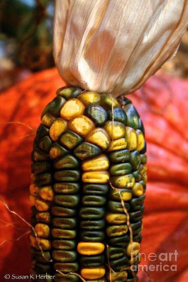 Vivid Agriculture Photograph