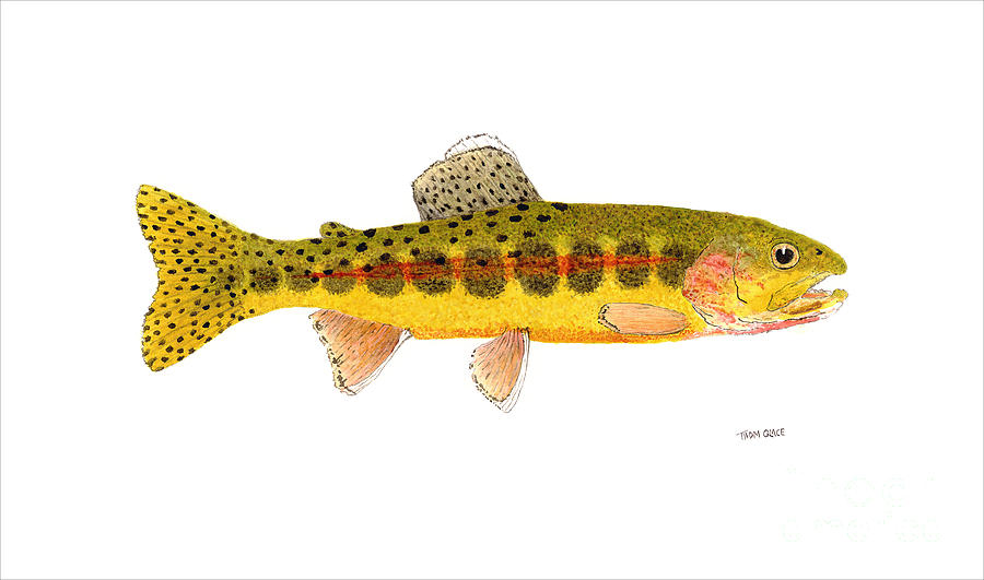 Trout Painting - Volcano Creek Golden Trout by Thom Glace