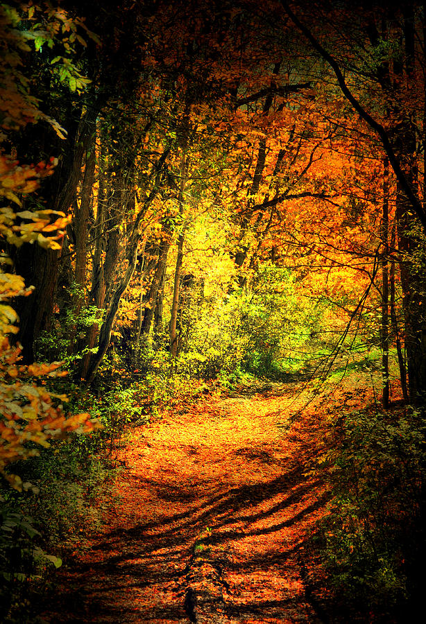 Fall Photograph - Walk The Trail by Emily Stauring