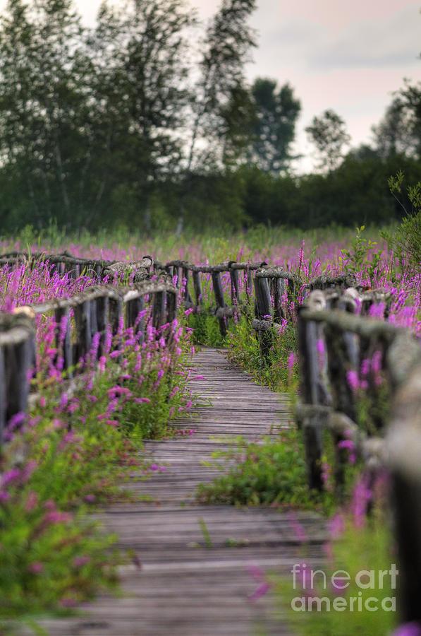 Walking In Magic... Photograph
