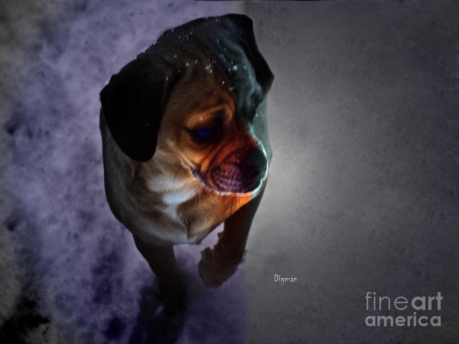 Walking On The Wrong Side Of The Snow - Puggle Madness Photograph  - Walking On The Wrong Side Of The Snow - Puggle Madness Fine Art Print