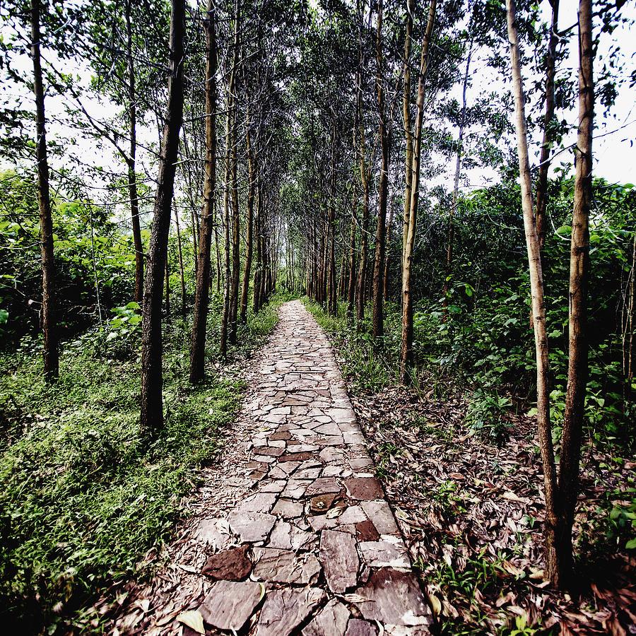 Art Photograph - Stone Path by Skip Nall