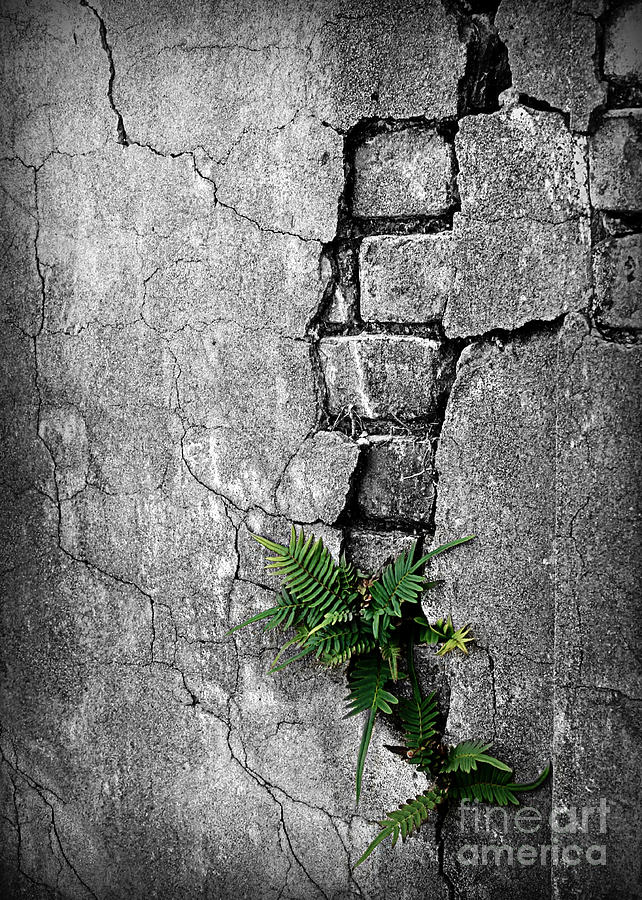 Wall Ferns Photograph
